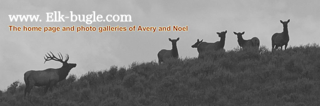 www. Elk-bugle.com